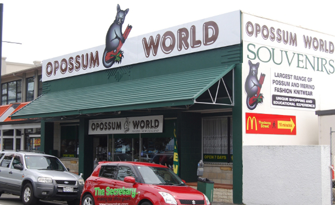 opossum-world; buidelratten in Napier