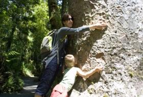 Een kauri boom knuffelen
