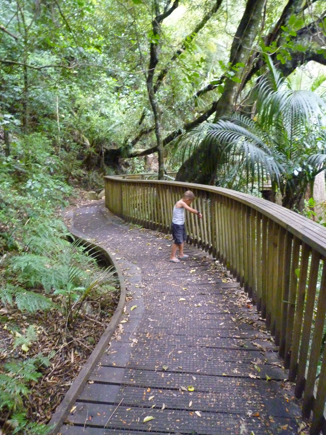 A.H. Reed Walkway, noordland (Nieuw-Zeeland)