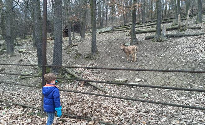 dierentuin van Brno 05