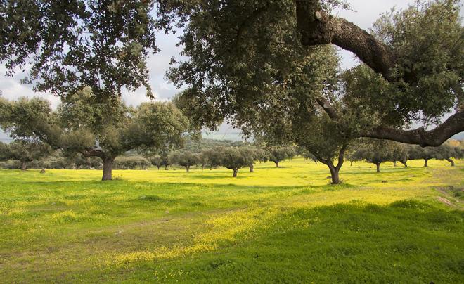 Tips voor een vakantie in Portugal - Alentejo