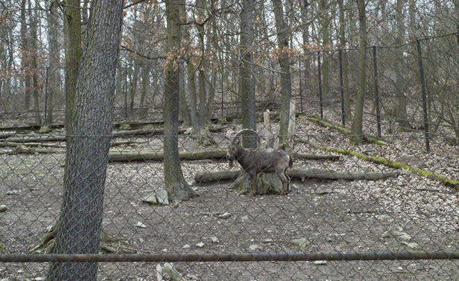 Parken in Brno - Brno Zoo 01