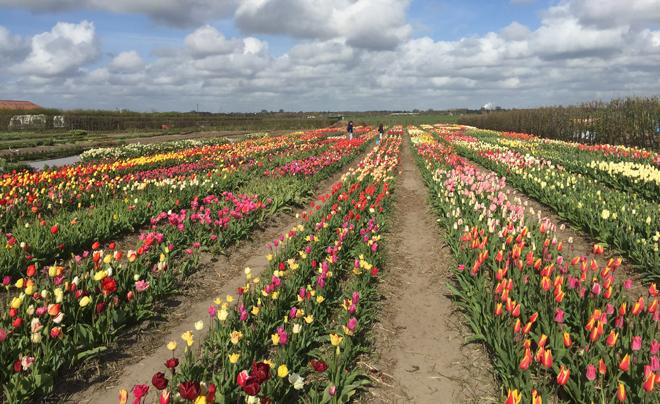 Zelf bloemen plukken 06