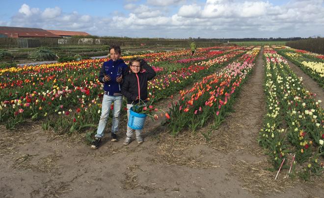 Zelf bloemen plukken 09