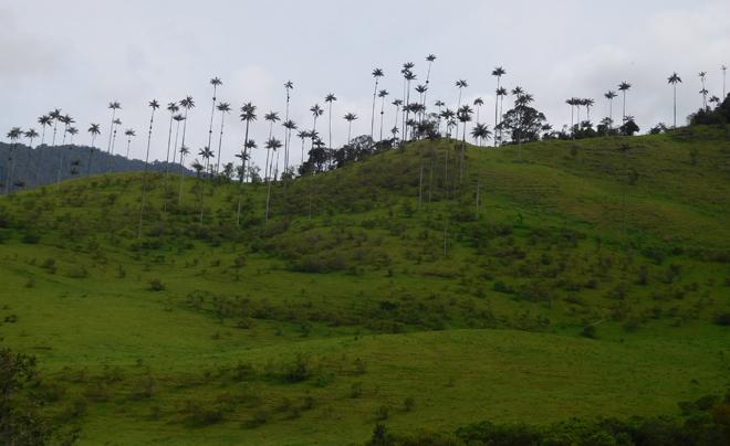 Rondreis door Colombia met kinderen 10
