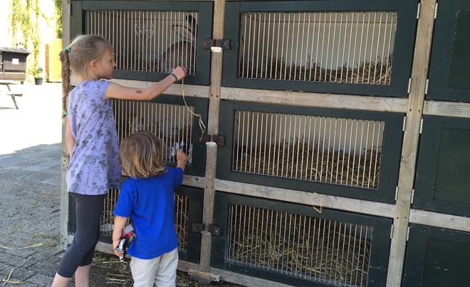 de leukste gratis activiteiten om met kinderen te doen - kinderboerderij