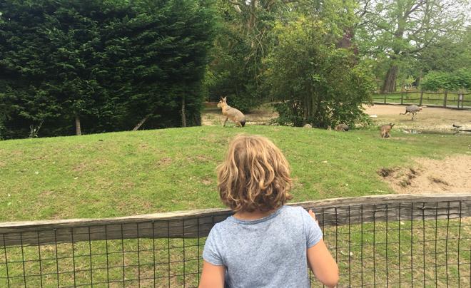 Met de kinderen naar plaswijckpark in Rotterdam 03