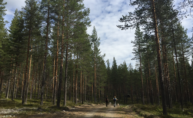 wandelen met husky's in Zweeds Lapland 05