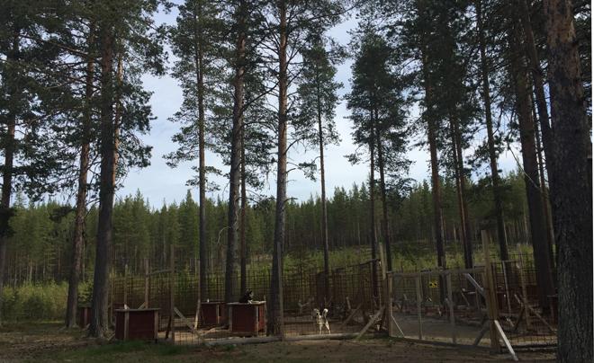 wandelen met husky's in Zweeds Lapland 18