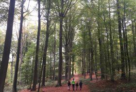 Wandelen met kinderen in de Vlaamse Ardennen - Brakelbos 07