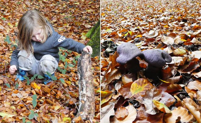 Wandelen met kinderen in de Vlaamse Ardennen - Brakelbos 09