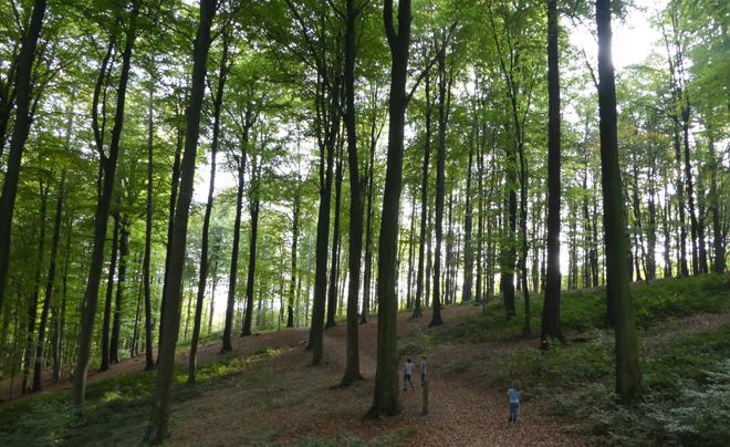 wandelen met kinderen in de Vlaamse Ardennen - Muziekbos 03