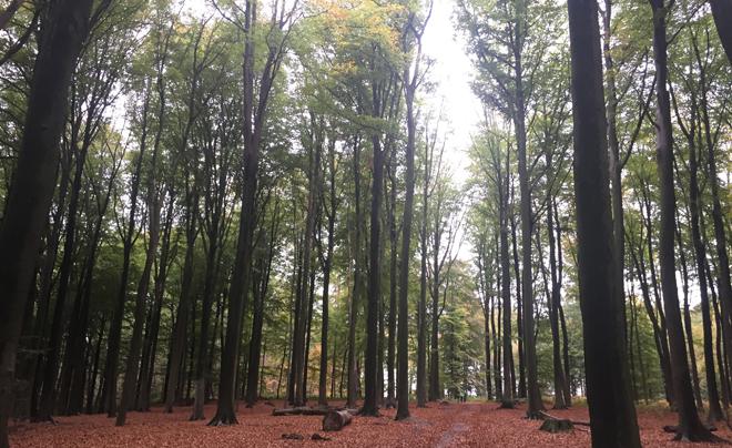 wandelen met kinderen in de Vlaamse Ardennen - Muziekbos 04
