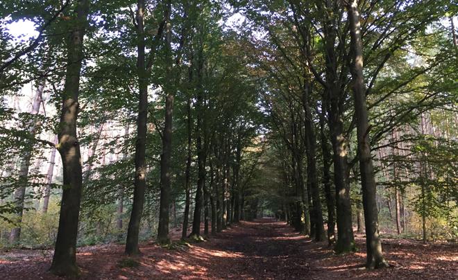 Wandelen op de Utrechtse Heuvelrug 12