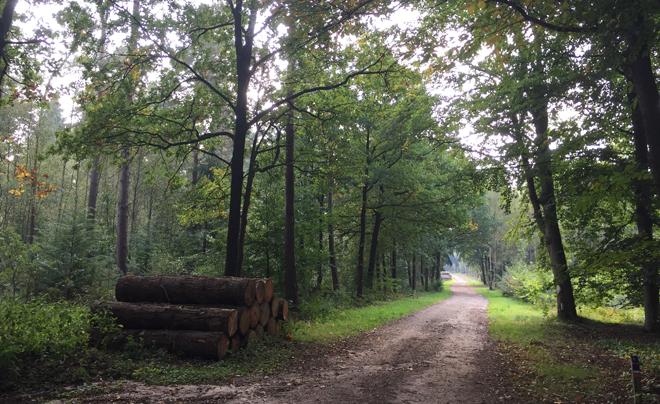 Wandelen op de Utrechtse Heuvelrug 15