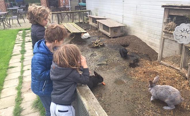 Kindvriendelijke accommodatie in de Vlaamse Ardennen 08