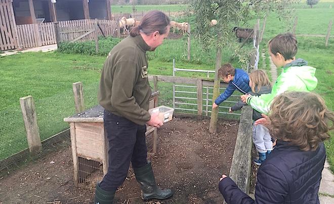 Kindvriendelijke accommodatie in de Vlaamse Ardennen 09