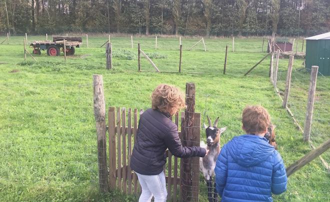 Kindvriendelijke accommodatie in de Vlaamse Ardennen 10
