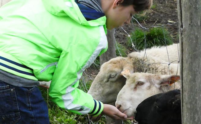 kindvriendelijke accommodatie in de Vlaamse Ardennen 26