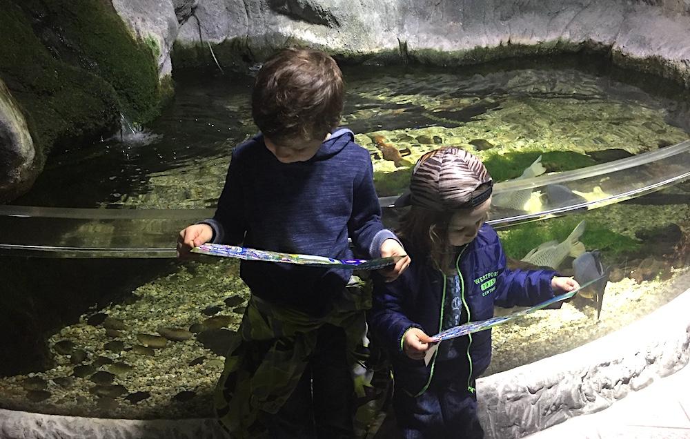 doen aan de Belgische kust met kinderen - Sealife