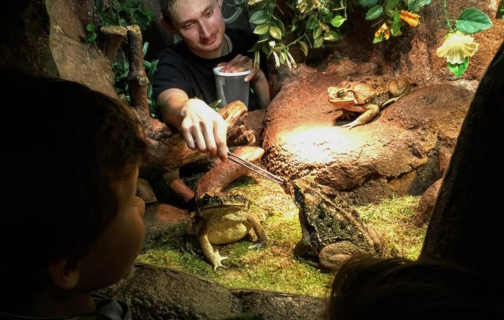 Doen aan de Belgische kust met kinderen - serpentarium