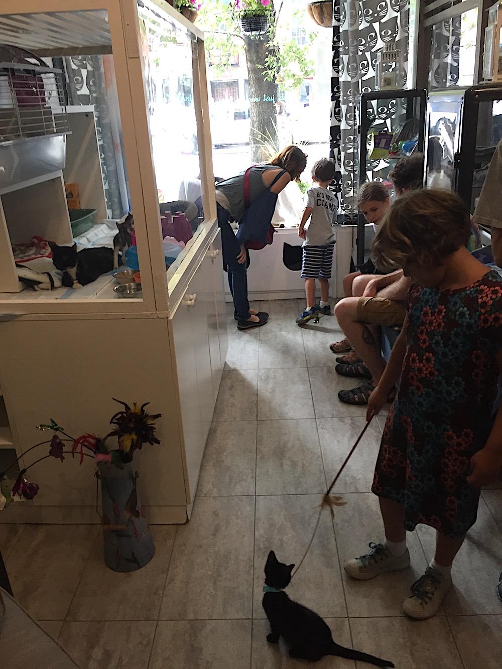 Doen in New York met kinderen - Cat Cafe 02