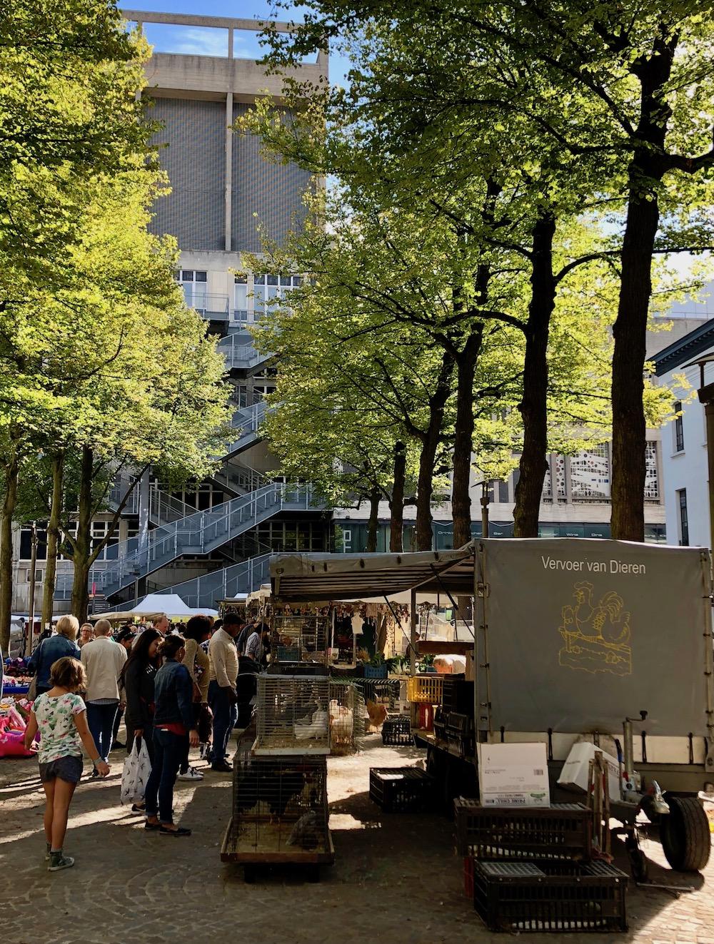 stadswandeling door Antwerpen 02
