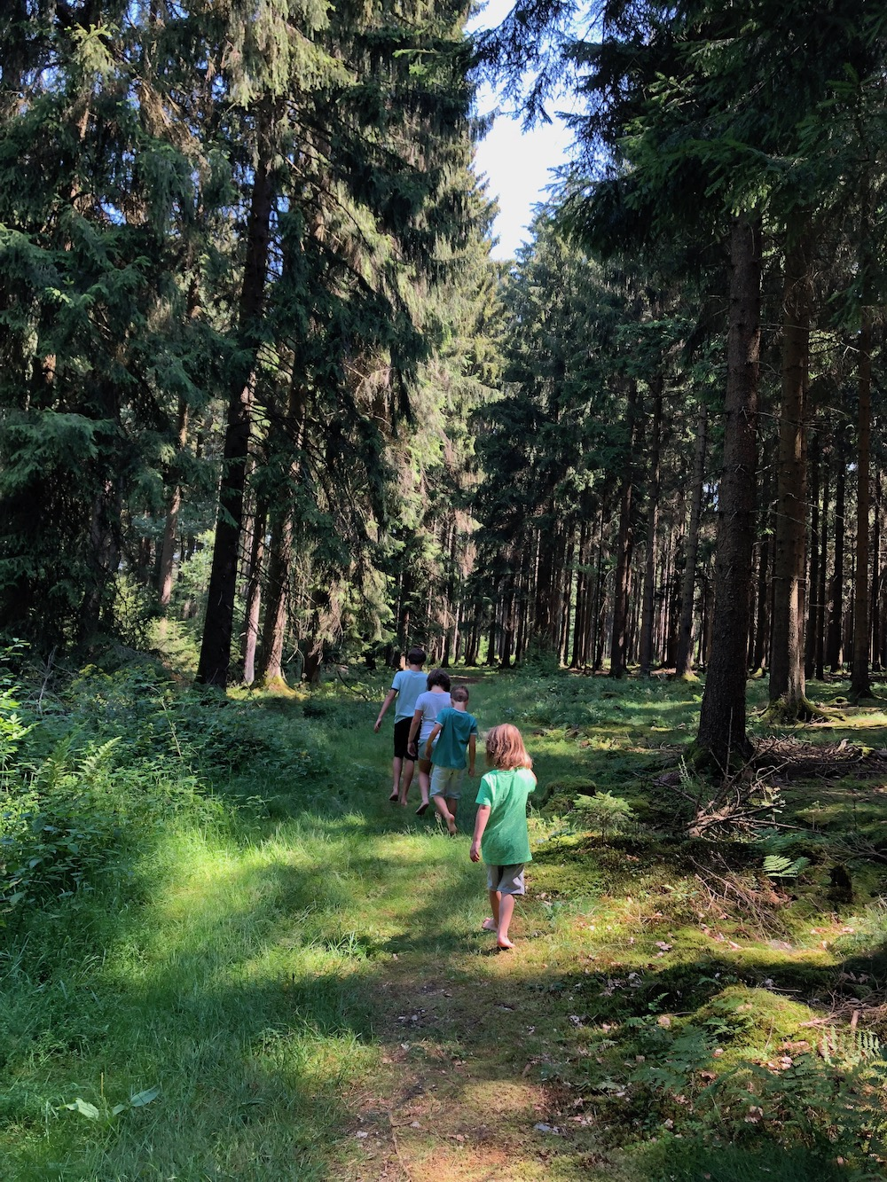 Zauberwald Hunsrück 07