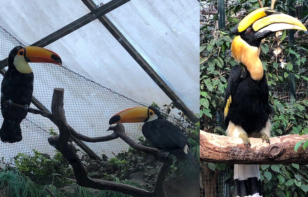 Vogelpark Avifauna 01