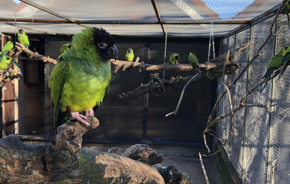 Vogelpark Avifauna 06