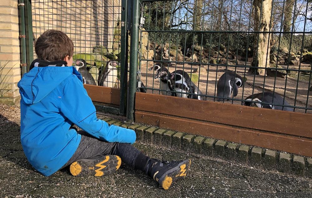 Vogelpark Avifauna 11