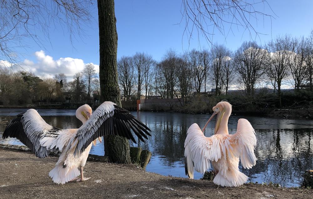 Vogelpark Avifauna 16