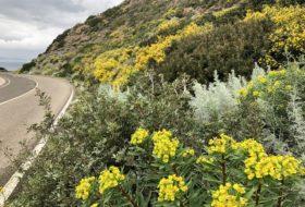 Roadtrip in het westen van Sardinië 02