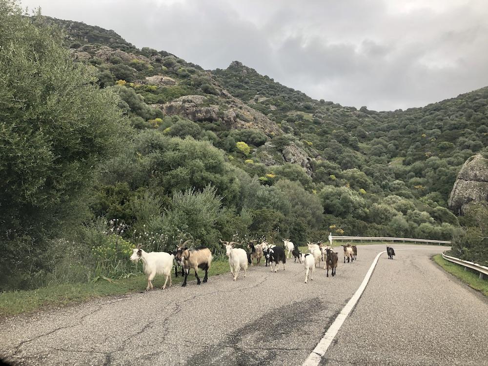 Roadtrip in het westen van Sardinië 05