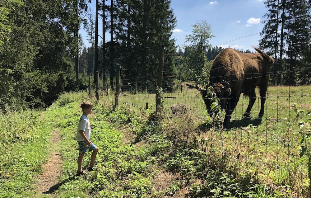 zomer in sauerland met kinderen 02