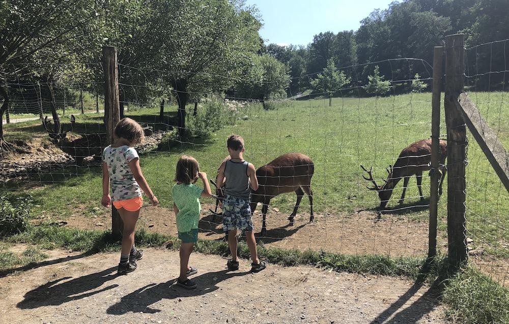 zomer in Sauerland met kinderen 04