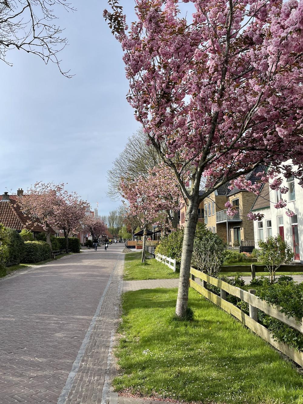 fietsen op Schiermonnikoog 12