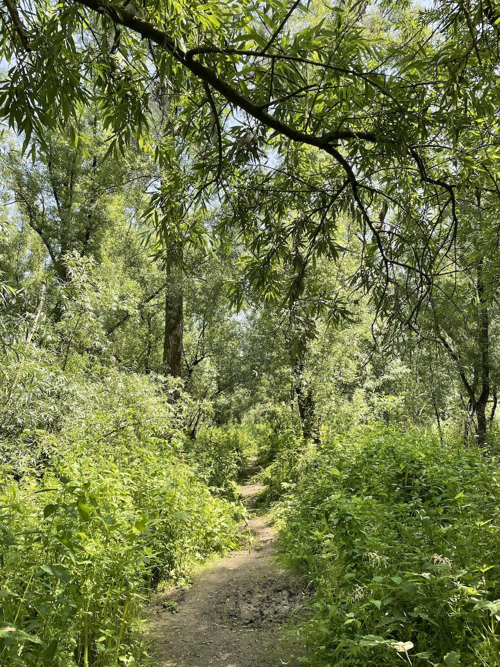 jungleroute door klein profijt 09